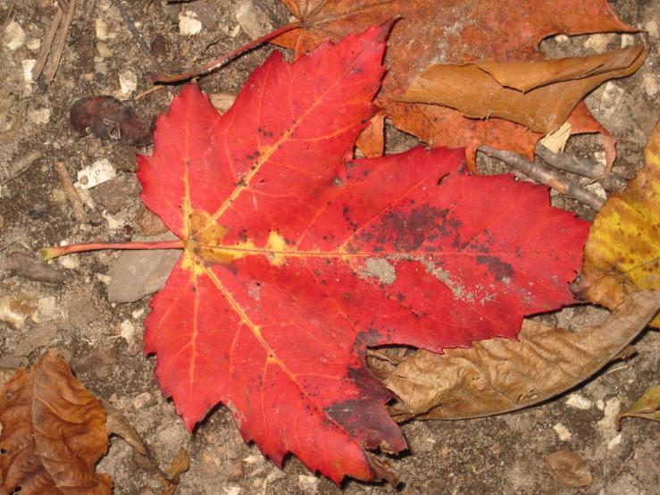 Autumn's Sign